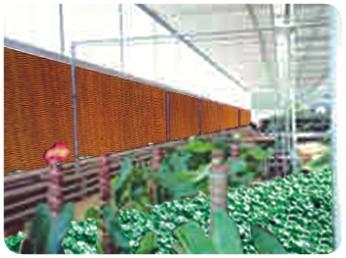花卉养殖场温室通风降温设备